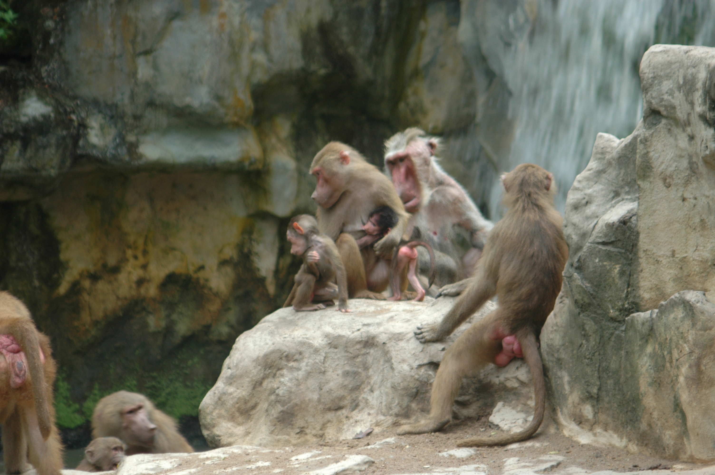 Blue Room Baboons